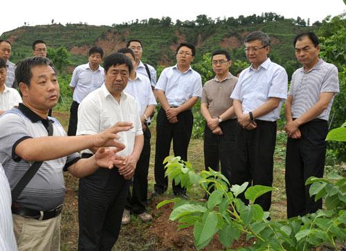 副市长景耀平陪同下,来到我校宝鸡陇县核桃试验示范基地东凤镇杜阳村