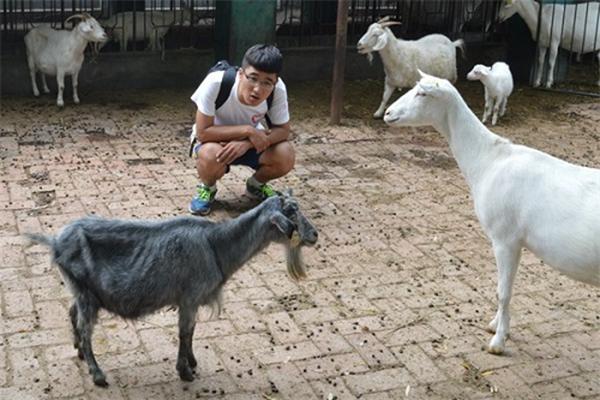 研成果之中国克隆动物