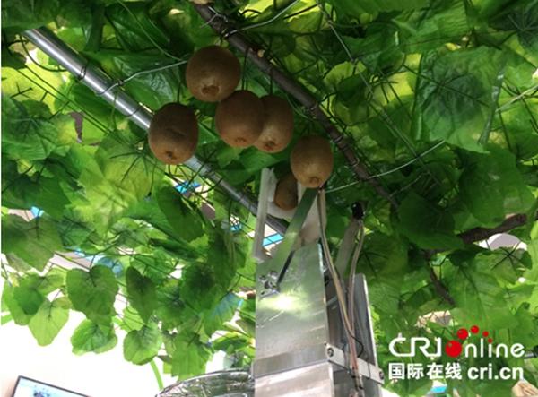 猕猴桃采摘机器人正在运行.-国际在线 农高会 指尖操控农业 智慧创造
