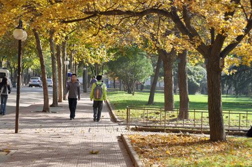 秋来校园景色美图片
