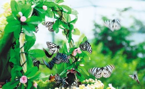 蝴蝶的蜕变过程简笔画