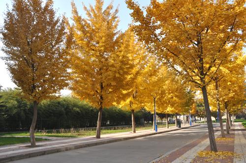 秋天来了,校园里美景处处